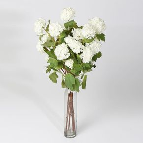 Single Guelder rose 4 Head