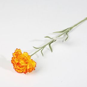 Single Carnation With Forst