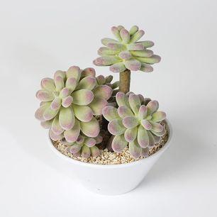 Lotus in melamine pot