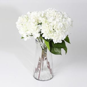 Single Hydrangea White