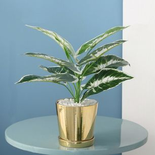 Taro Leaves Pot