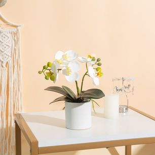 Small White Orchid White